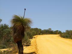 西オーストラリア ワイルドフラワードライブ(3) カルバリ国立公園編
