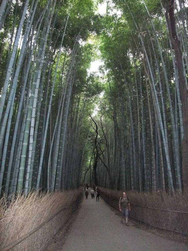 天皇陛下 御即位20年記念で『 京都御所 』特別公開を見終わったら、午後1時を過ぎていました。<br /><br /> 日帰りですので『 坂本龍馬の墓 』、『 清水寺 』はあきらめて京都駅に返り、JR嵯峨野線で嵐山・嵯峨野に急ぎました。<br /><br /> 嵯峨野『 竹林の道 』は、ぜひとも見て帰るつもりでした。<br /><br /><br /><br /> では、『 竹林の道 』をどうぞ。<br /><br /><br /><br />(なお、編集終了まで内容が変わること、ご容赦願います。)