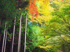 高雄・神護寺の紅葉を見に                Jingoji, Kyoto