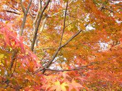 私が見た今年一番の紅葉 ☆゚*☆ 大山崎山荘美術館 ☆゚*☆