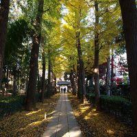 素晴しい紅葉 太田黒公園−1