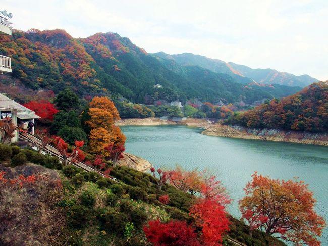 津市美杉町は、津市街地から久居・白山町を経由して車で1時間、奈良県と境を接する山間の地にあります。<br /> 平成18年の大合併までは、一志郡美杉村として、村名の通りの美材を産出し、また古くは京都・大坂から奥津経由で最終的に伊勢神宮にいたる伊勢本街道が通過していた地で、歴史的事跡も多い土地です。<br /> もちろん、山あいの風光明媚な地域も多く、特に秋は山々の紅葉が美しい景観を織りなします。<br /><br /> 友人たちと、美杉の秋を訪ねました。 <br /><br />