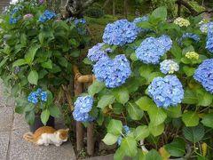 080619紫陽花の鎌倉しっかり歩き(1)