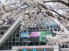 春の高尾山
