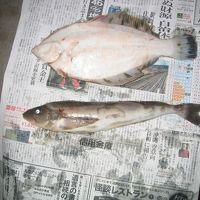 道南釣りの旅-2009-/大成でホッケ釣りを楽しみました