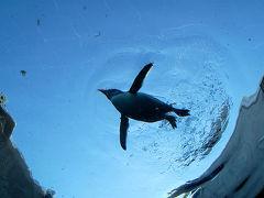 ペンギンが空をとぶ