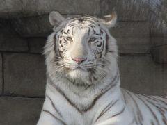 きっかけはイルミネーション!───はじめての東武動物公園(1)1番目当てはホワイトタイガーだけど@