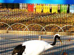 東武動物公園-1 タンチョウヅルで謹賀新年 ☆野生環境を再現して