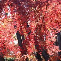 小木津山自然公園でバードウォッチング [2009](1)