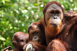 シンガポール動物園 ∞ アジア・グランドサークル・ツアー(2) ∞