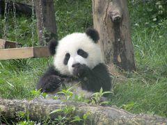 成都4日間 4日目「大熊猫」