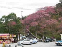 沖縄のさくら祭り
