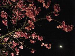 2010 日本一早い桜とダイビングの旅