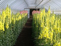 館山ファミリーパーク温室内の花達