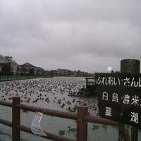 ラムサール条約湿地の旅0812  「瓢湖」   ~阿賀野・新潟~