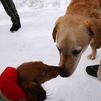 けびぞーが行く「湯沢・犬っこまつり」愛犬祈願祭