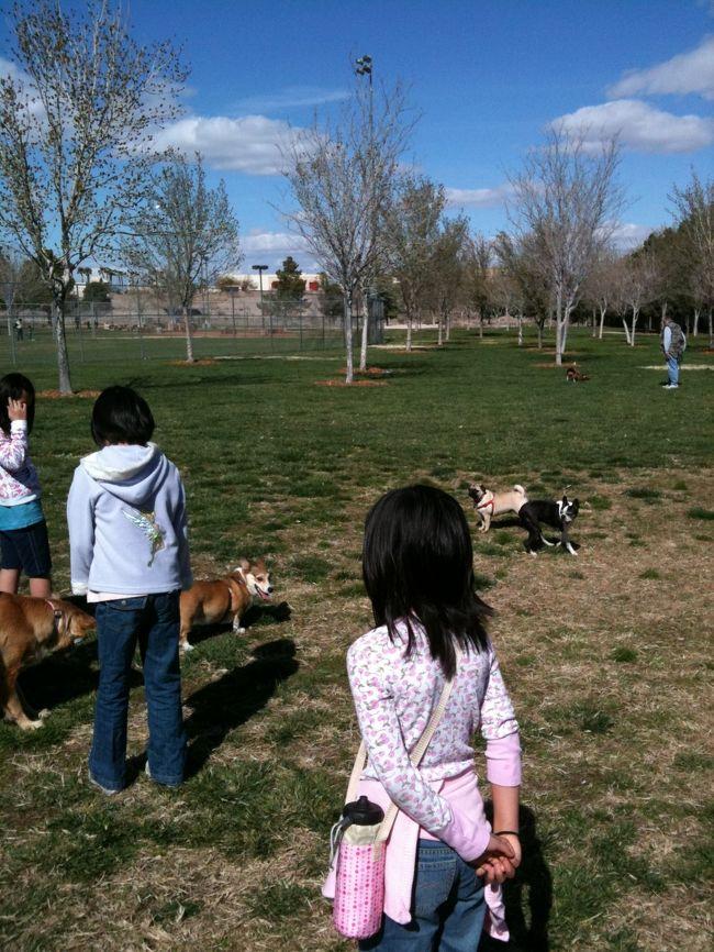 """PETを連れてのアメリカ旅行。お付き合いのある名古屋のトラベルエージェントさんではそんな旅行も取り扱っています。<br />ウチにはやっと1歳になったゴールデンリトリーバーのAI(メス)がいますが、最近は毎朝Windmill&Pecosの交差点近くにある公園に散歩へ行く事が日課になっています。<br />アメリカの公園では通常柵で囲まれた特定のスペース以外Leash(ひも)を付ける事が義務付けられていますが、この公園はドッグパークでも無いのにいつの間にか""""全くひもやつなを使わない""""事が当たり前となってしまい、管理する市の係員も何年と黙認している状態です。<br />平日は毎朝(入れ替わり)で常に10〜20匹の小型(チワワの様な)〜大型犬が一緒に遊んでいます。<br />野球チームのチビッ子達で賑わう週末だけは""""それまで何も無かったかの様に""""皆首輪とひもを使って散歩しています。<br />公園の横には砂漠のトレイルがあって、そこもウチのAiはお気に入りです。<br />モハベ砂漠に生息している野生のウサギなどを見つけては後を追っ掛けています。<br />1歳の誕生日には人気のIn−Outバーガーをあげてみました。<br />(野菜ぬきでミートとパンだけ。アッという間にFINISHされました。)<br />仲良しのイエローラブ""""ゾーイ""""、ビーグルの""""マギー""""、たまに喧嘩するブルドッグの""""マーフィー""""。<br />ここに集まる犬も飼い主も基本的には皆フレンドリーなので、自然に""""日々の交流の場""""となっています。<br /><br />黒澤/クロスインターナショナル<br />www.kurosnavi.com<br />"""