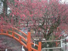 光琳の梅を見に、下鴨神社へ。