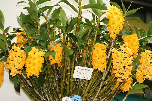 2010年にナゴヤドームで開かれた、フラワードーム紹介の続きです。蘭の紹介です。