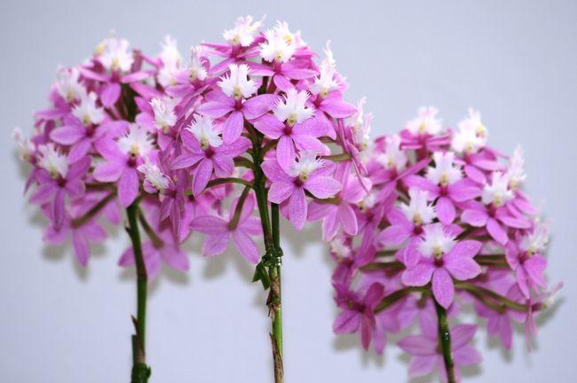 ナゴヤドームで2010年開催のフラワードーム紹介の続きです。展示品の蘭の紹介です。