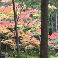 京都(三千院・西芳寺など紅葉巡り) 2006年11月