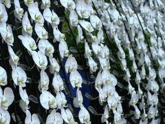 2010春、フラワードーム(6):3月13日(6):オーキッドディスプレー・東山植物園展示コーナーほか
