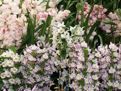 2010春、フラワードーム(7):3月13日(7):オーキッド・ディスプレー・東京オーキッド・ナーセリーほか