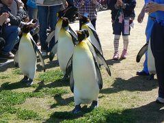 長崎ペンギン水族館でペンギン三昧