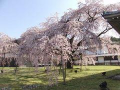京都('10 花見)