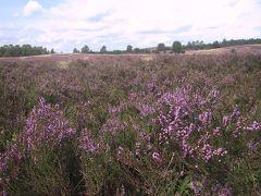 Lüneburger Heide 2005