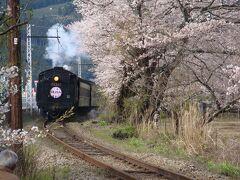☆2010花見① 川根SLと家山の桜トンネル