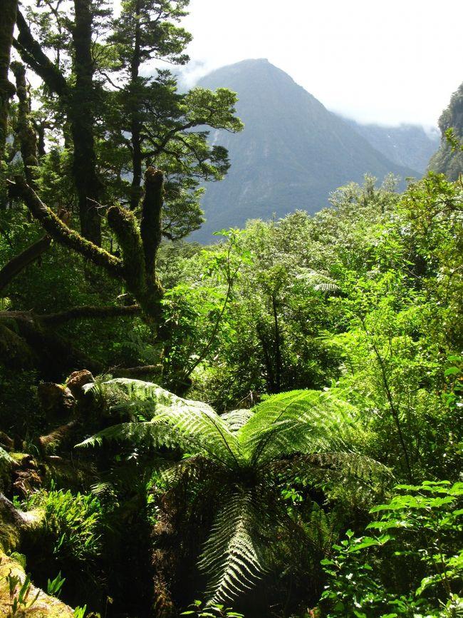 『NZ-37 豪快なキャズムの奇岩群 ☆原生林の遊歩道を歩いて』フィヨルドランド国立公園周辺(ニュージーランド)の旅行記・ブログ by マキタンさん【フォートラベル】