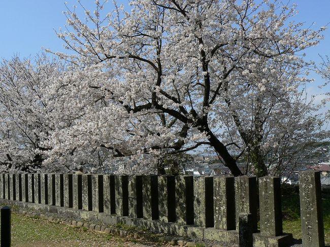 去年の今頃は転勤の準備で忙しくて花見どころではありませんでした。今年は2年分の桜を見るぞ〜。<br />第3弾は大村編です。大村に行く前に、ちょこっと長崎市内の桜もね。(^^)<br /><br />☆大村護国神社<br />☆春日神社<br />◇旧楠本正隆屋敷<br />☆大村公園<br />