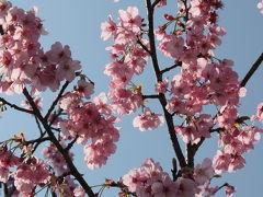 成田 さくらの山公園 ~桜と飛行機 + おまけ~