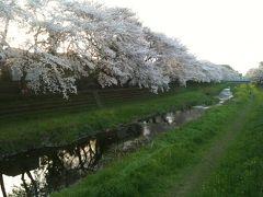 野川サイクリングロードでお花見 つつじヶ丘~深大寺ウォーキング