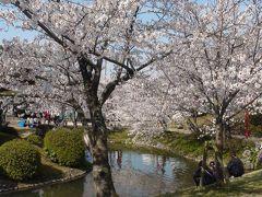 桜100選佐賀編(小城公園)