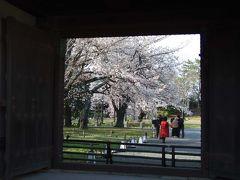 日帰り京都散策(第7回)。桜の季節の二条城