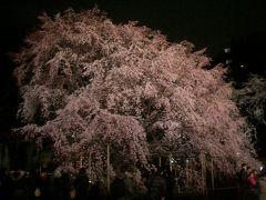 六義園の枝垂桜のライトアップに感動