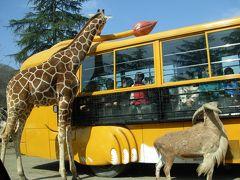「 群馬 サファリ・パーク 」 で、 車 から、 動物達 を 生態 観察。 ( 「碓氷峠 鉄道 文化 むら 」 で、 トロッコ 列車! に 乗る )