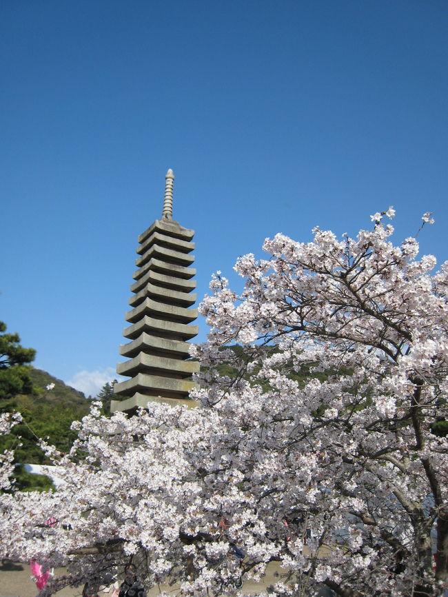 近江の地はまだまだ不十分も、京都は桜真っ盛り。関西で桜を愛でたいと思うも、候補は①姫路城②醍醐寺③哲学の道をはじめとした東山④奈良公園をまずは考えましたが、尋常じゃない混み具合が予想されます…<br />しばし考えて、名神を使わない、1時間程度の範囲で桜満開ということで宇治にしました。平等院も宇治神社も宇治上神社も行っていない、花見オンリーも疲れなくていいですね。