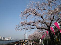 花も団子も 春のうららの隅田川~向島 ◇お江戸散歩(5)◇