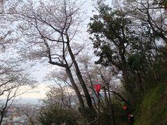 ☆2010年花見④ 満開御殿山&江戸の香り蒲原宿