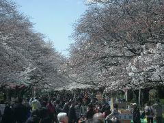 上野をあるく。花と団子をもとめて。