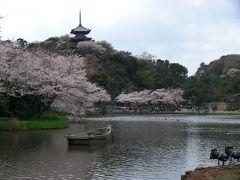 1004横浜~今年のお花見は三渓園♪+露天風呂★とりあえず写真だけ