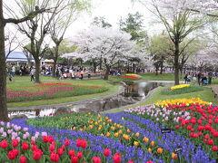 桜吹雪舞う花畑
