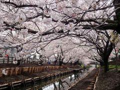 桜舞う・川越散策①