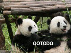 パンダに会いに中国へ 2009.4