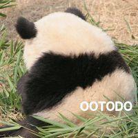 パンダに会いに中国へ 2009.12 四川省成都大熊猫繁育基地