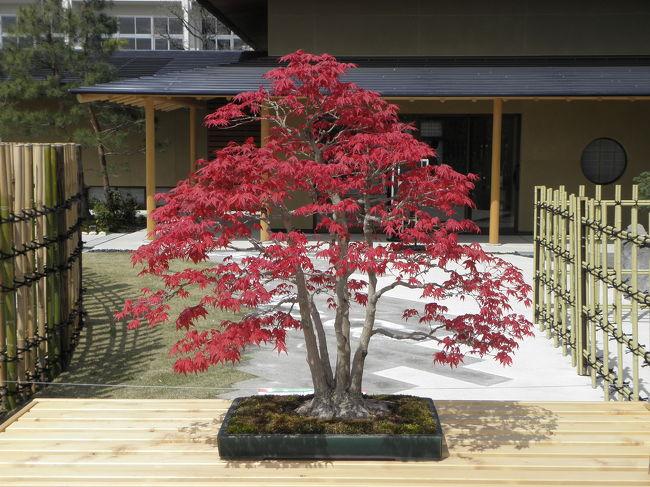 まぁ、お散歩なんですけどね。<br /><br />3月の下旬にオープンした「大宮盆栽美術館」に行ってきました。<br /><br />ただ、館内ほぼ撮影禁止だったので…(汗)<br />もともと桜も見るつもりでの散歩だったので、何がメインの旅行記なんて野暮なことは聞かないでくださいね!!<br /><br />お散歩ですから!!!!<br /><br />「大宮盆栽美術館」→「見沼グリーンセンター」→「大宮公園」
