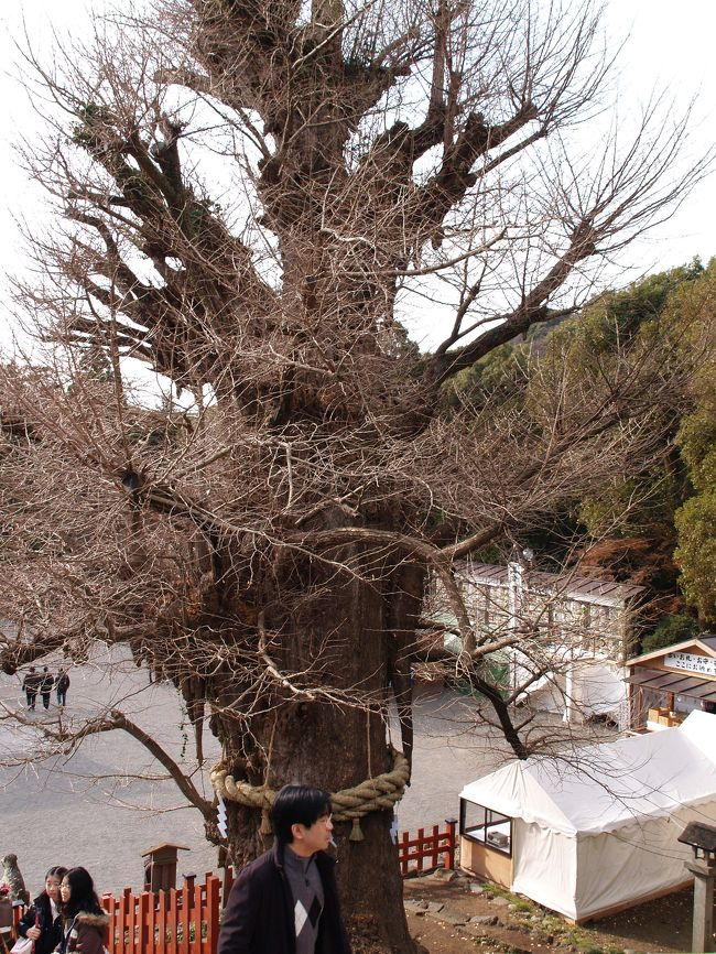 鎌倉鶴岡八幡宮の在りし日の大銀杏の写真を集めてみた。意外にも大銀杏を撮ろうとして撮った写真は1枚しかなかった。あとは背景や前景としてたまたま写っているものばかりであった。2005年から2007年の鎌倉の写真もなかった。頻繁に鎌倉へは行ってはいたが、祭りででもないとカメラは持参しなかったのだ。<br />(表紙写真は2009年12月30日(大晦日前日)の大銀杏)